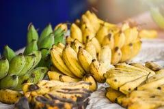 Банан сбора от органического плода сада стоковое фото rf