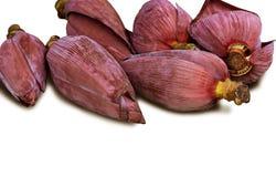 Банан цветения изолированный на белой предпосылке с путем клиппирования стоковая фотография rf