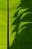 Банан Leaf-12 стоковое изображение rf