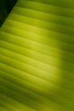 Банан Leaf-19 стоковая фотография