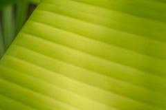 Банан Leaf-20 стоковое фото