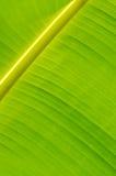 Банан Leaf-15 стоковое фото