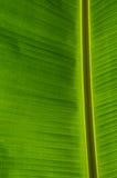 Банан Leaf-21 стоковые изображения