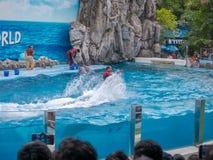 БАНГКОК, ТАИЛАНД - 16,2018 -ГО ИЮНЬ: Выставка дельфинов на мире сафари Самая умная выставка искусства и фокусов Мир сафари b Стоковое Изображение