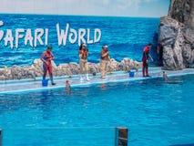 БАНГКОК, ТАИЛАНД - 16,2018 -ГО ИЮНЬ: Выставка дельфинов на мире сафари Самая умная выставка искусства и фокусов Мир сафари b Стоковая Фотография