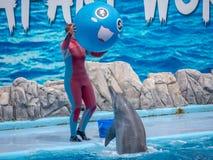 БАНГКОК, ТАИЛАНД - 16,2018 -ГО ИЮНЬ: Выставка дельфинов на мире сафари Самая умная выставка искусства и фокусов Мир сафари b Стоковые Фотографии RF