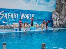 БАНГКОК, ТАИЛАНД - 16,2018 -ГО ИЮНЬ: Выставка дельфинов на мире сафари Самая умная выставка искусства и фокусов Мир сафари b Стоковые Изображения