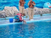 БАНГКОК, ТАИЛАНД - 16,2018 -ГО ИЮНЬ: Выставка дельфинов на мире сафари Самая умная выставка искусства и фокусов Мир сафари b Стоковые Фото