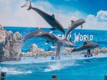 БАНГКОК, ТАИЛАНД - 16,2018 -ГО ИЮНЬ: Выставка дельфинов на мире сафари Самая умная выставка искусства и фокусов Мир сафари b Стоковые Изображения RF
