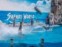 БАНГКОК, ТАИЛАНД - 16,2018 -ГО ИЮНЬ: Выставка дельфинов на мире сафари Самая умная выставка искусства и фокусов Мир сафари b Стоковое фото RF