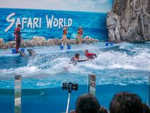 БАНГКОК, ТАИЛАНД - 16,2018 -ГО ИЮНЬ: Выставка дельфинов на мире сафари Самая умная выставка искусства и фокусов Мир сафари b Стоковая Фотография RF