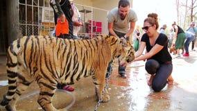 БАНГКОК, ТАИЛАНД - ФЕВРАЛЬ 2014: Тигр людей подавая вручную сток-видео