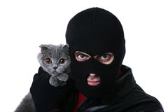 Бандит бизнесмена с котом стоковые фотографии rf