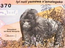 Банкнота валюты Африки Стоковое Фото