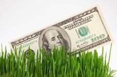 Банкнота в траве Стоковые Изображения