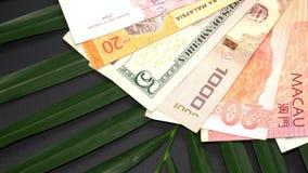 Банкноты международной валюты вращая на лист пальмы акции видеоматериалы