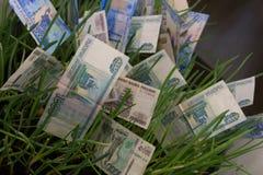 Банкноты русского рубля в зеленой траве представьте счет рост зеленого цвета травы доллара растущий 100 дег одной принципиальная  Стоковое Фото
