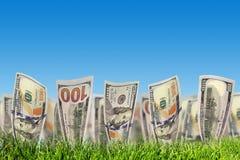 100 банкнот доллара растя от травы деньги Стоковая Фотография RF