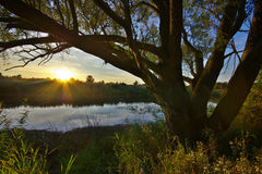 Банк озера в солнечном свете после полудня Стоковое Фото