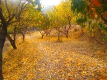 банк осени красит немецкий желтый цвет вала реки rhine стоковое фото rf