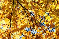 банк осени красит немецкий желтый цвет вала реки rhine Стоковые Фото