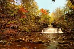 банк осени красит немецкий желтый цвет вала реки rhine Стоковая Фотография RF