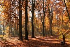 банк осени красит немецкий желтый цвет вала реки rhine Стоковая Фотография