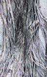 Баньян формы гриба Стоковое Фото