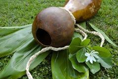 Барабанчик тыквы Ipu Heke гаваиский двойной Стоковое Изображение RF