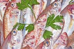 Барабулька и среднеземноморские рыбы Стоковые Изображения RF