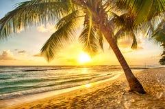 Барбадос Стоковая Фотография