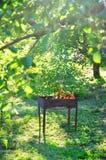 Барбекю заполненное с углями Стоковые Изображения