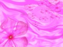 барвинок цветка предпосылки Стоковая Фотография
