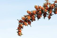 Барьеры ветви Стоковые Изображения RF
