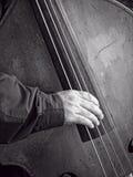 Басовая скрипка Стоковая Фотография