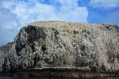 Басовый утес, Шотландия Стоковая Фотография RF