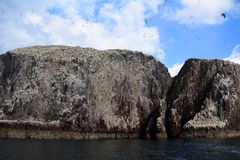 Басовый утес, Шотландия Стоковая Фотография