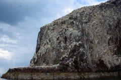 Басовый утес, Шотландия Стоковое Фото