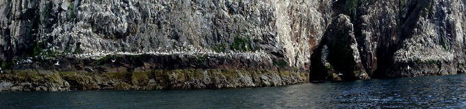 Басовый утес, Шотландия Стоковые Фото