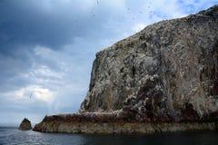 Басовый утес, Шотландия Стоковое Изображение RF