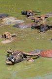 бассеин буйвола Стоковое фото RF