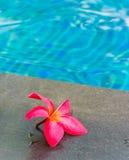 бассеин цветка Стоковая Фотография RF