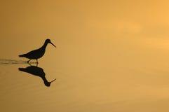 бассеин ii wading Стоковая Фотография RF