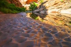 Бассейн воды - тропа Moab Юта каньона охотника стоковое фото