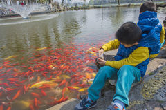 Бассейн в парке для того чтобы наблюдать ребенка рыбки Стоковое Изображение