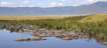 Бассейн гиппопотама в дне Стоковая Фотография RF