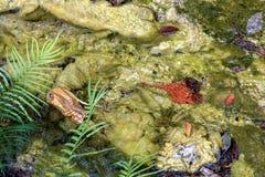 Бассейн горячего источника и кристалла Стоковое Фото