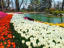 Бассейн и цветки Стоковая Фотография