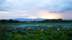 Бассейн лотоса Стоковое Изображение