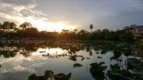 Бассейн лотоса Стоковое Изображение RF